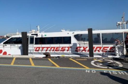 Rottnest Express Fremantle