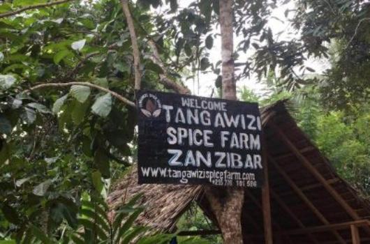 Zanzibar Tangawizi Spicefarm